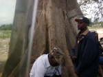 Sacred Ceiba tree and folks bearing witness at the Dajabon, DR-Ouantaminthe, Haiti border crossing