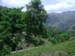 Haiti is not barren