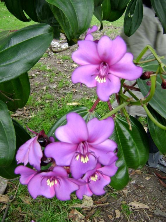 Vibrant Flowers in Colombia/Como vibran las flores en Colombia