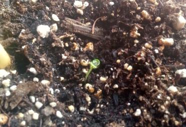seed growing 4